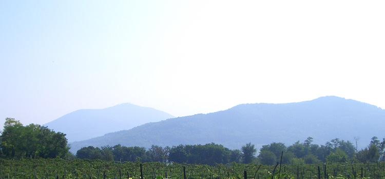 Euganeischen Hügel